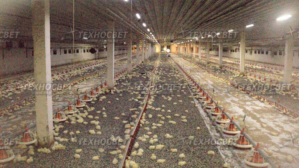 Светодиодное Освещение Для Свиноводства